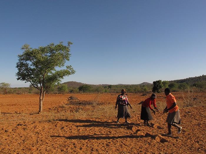 Image depicting Crisis in Zimbabwe