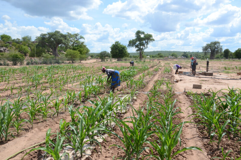 Detailed photograph of Struggling Farmers