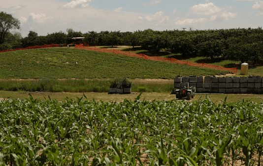 A view of corn crops u-pick strawberry fields and cherry trees are seen at Westview Orchards & Adventure Farm in Washington Township