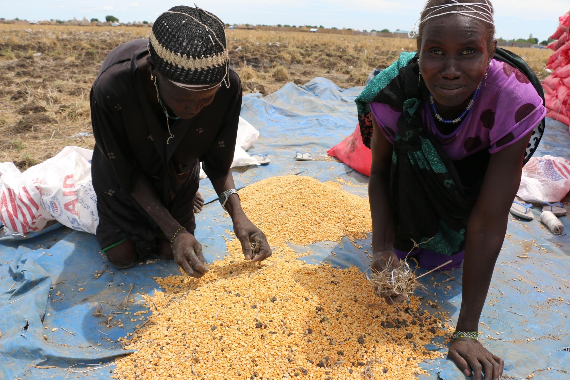 Two women sift through yellow split peas on a blue mat