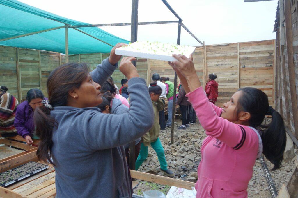 WFP brings hydroponic farming to urban communities