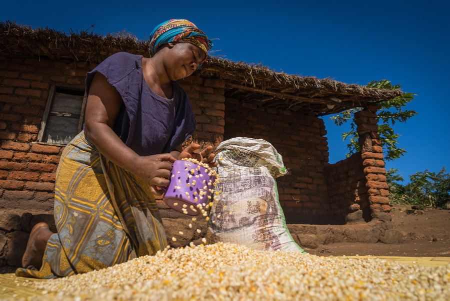 A woman in Malawi puts dried corn in a bag