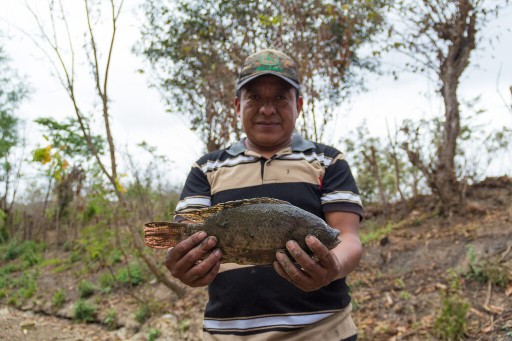 Fish are dying in a Guatemalan lagoon due to drought