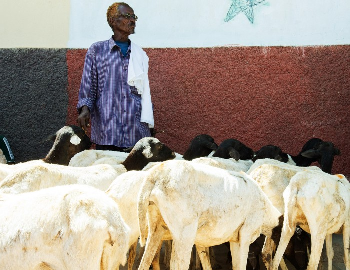 Man in Somalia with goats