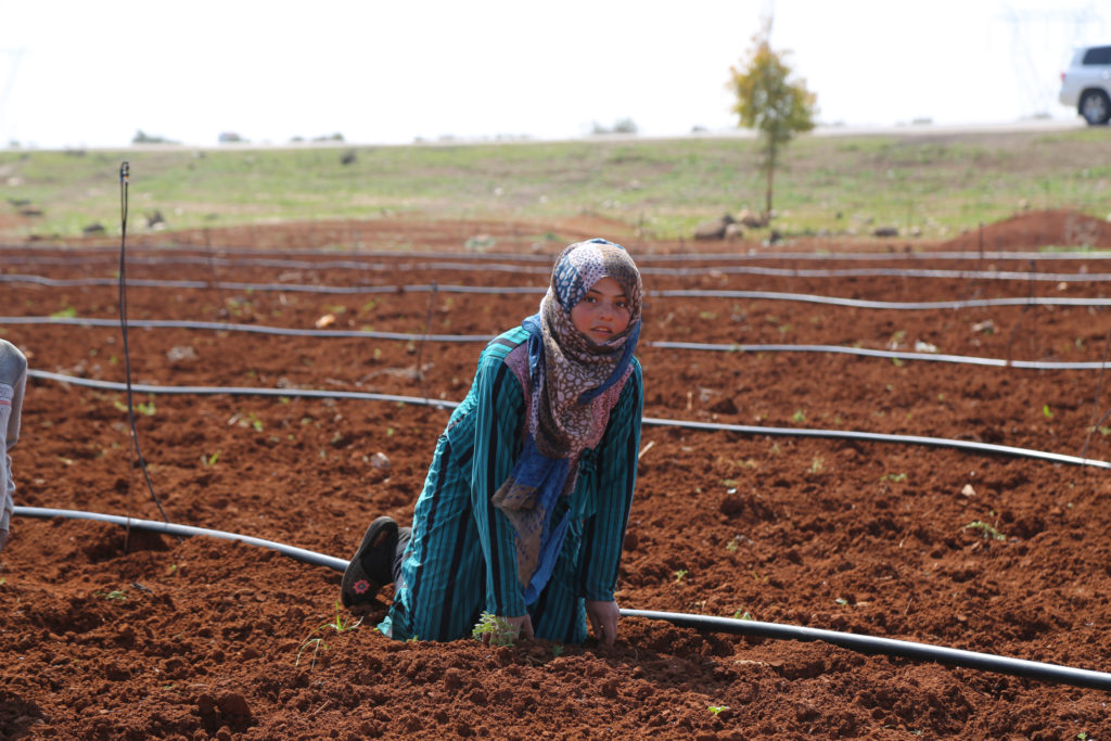 A young Syrian girl works in a farm to help support her family
