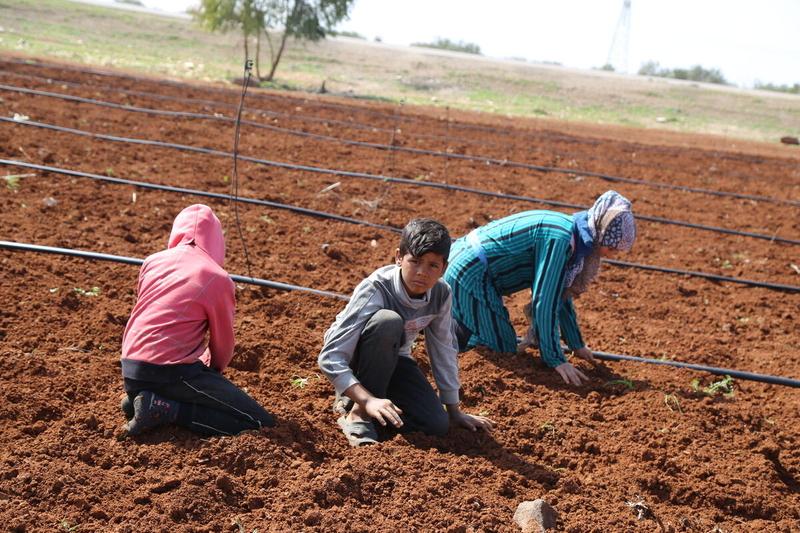 children farming in syria