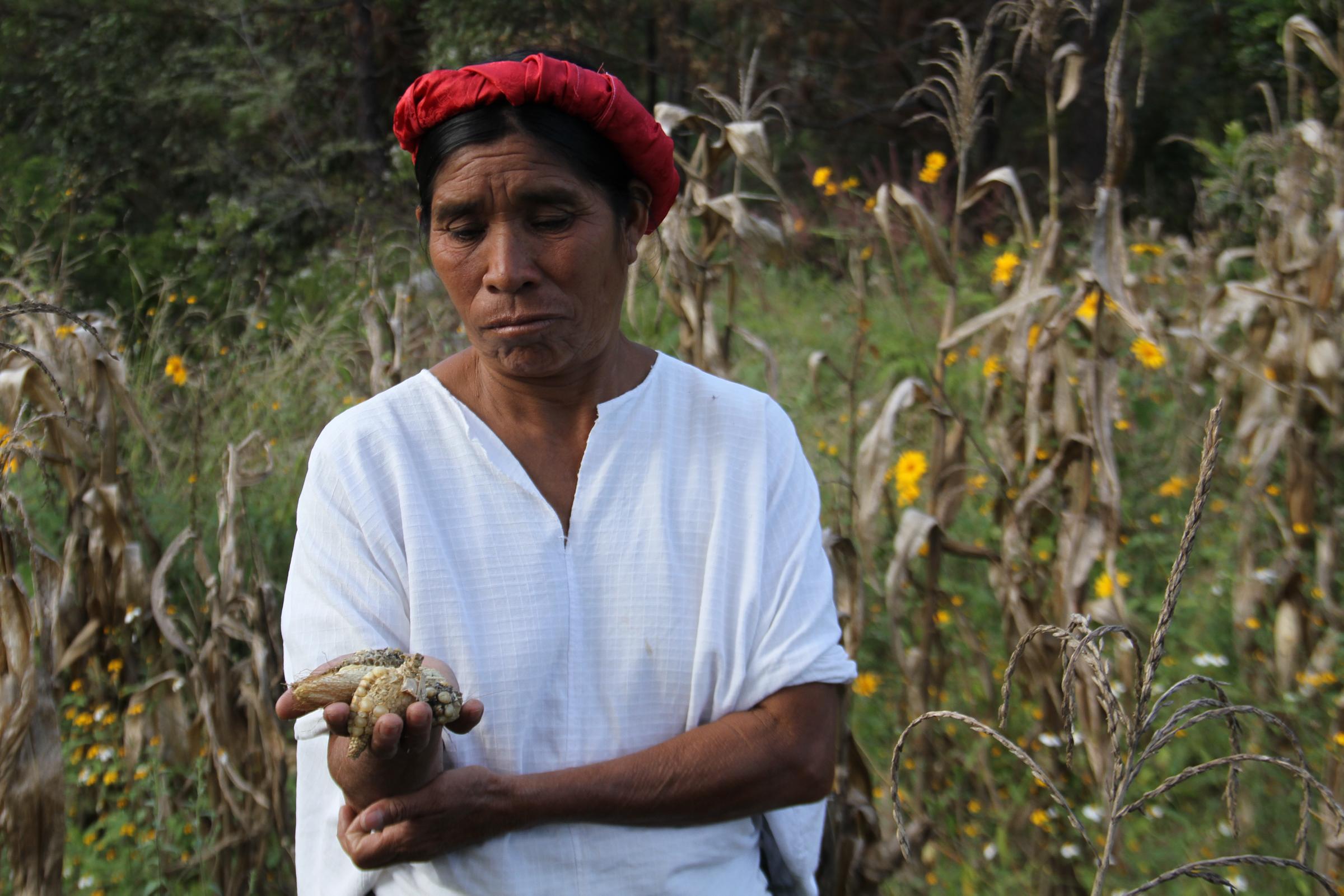female farmers holds dried corn