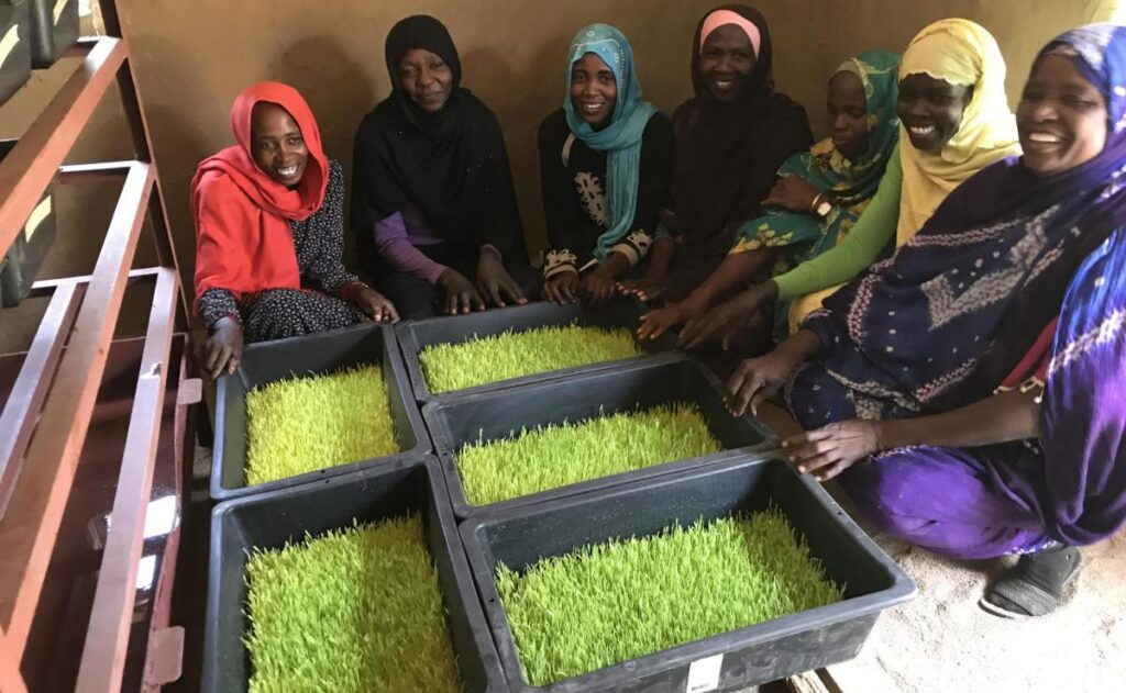 A group of women in headwraps sit on the floor, presenting sections of hydroponically grown animal fodder.