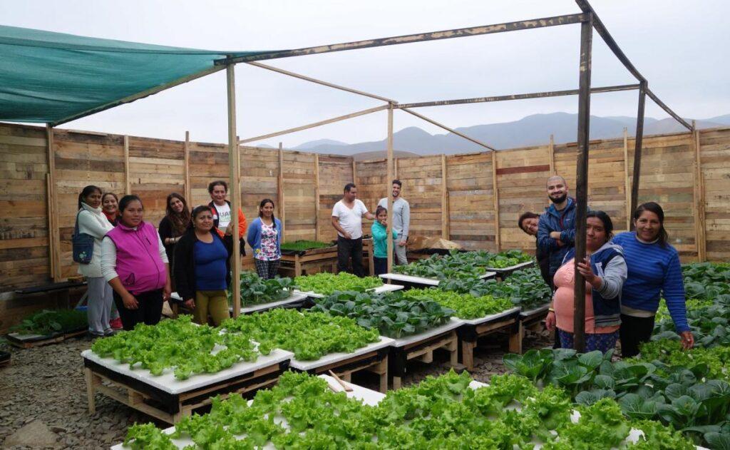 Entrepreneurs in Lima surround their hyrdoponic grow units.