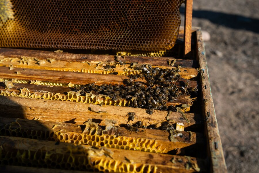 beehive full of bees and honey