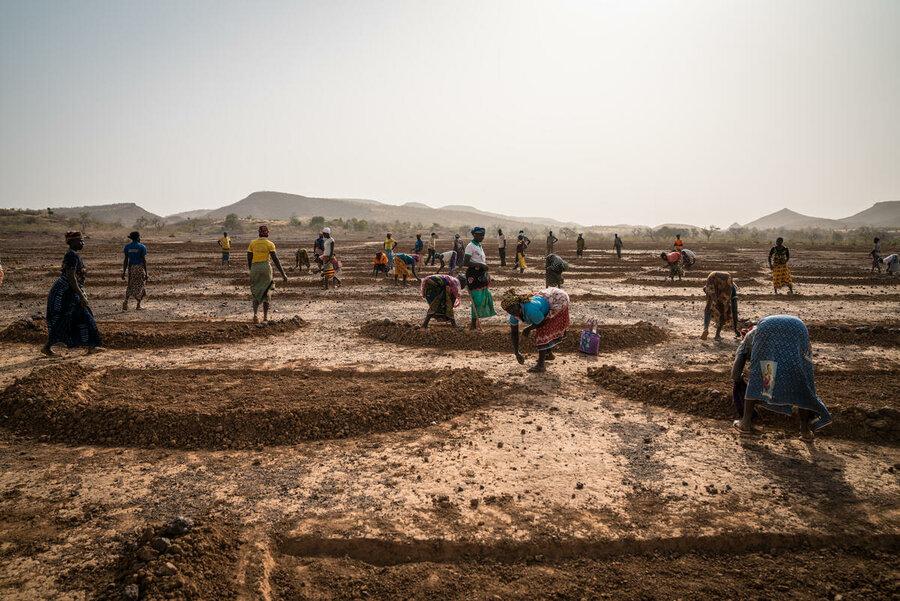 people digging holes in field