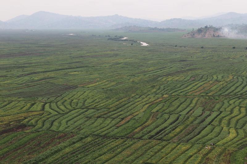 Crop fields in Rwanda prone to flooding