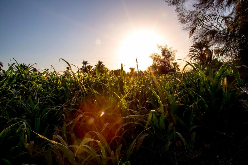 sunset over fields of crops