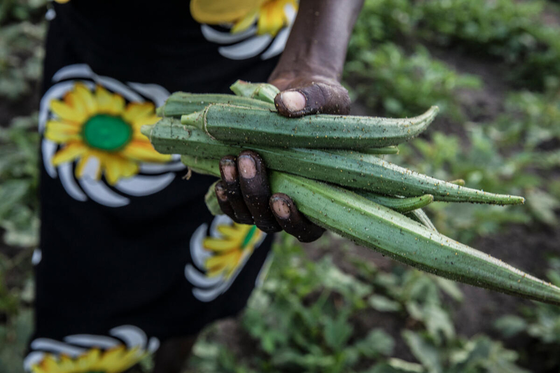 woman holding vegetables in garden