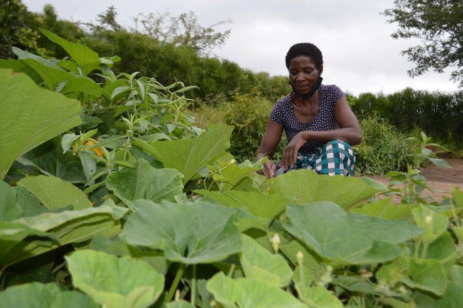 woman gardening in a field