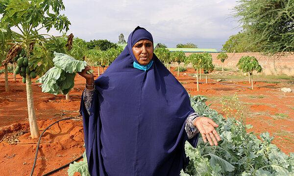 woman in blue headscarf holding up leafy greens on farm
