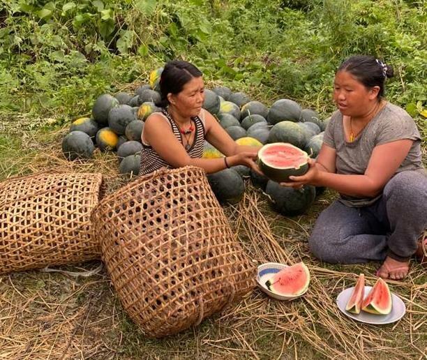 women holding watermelons in field