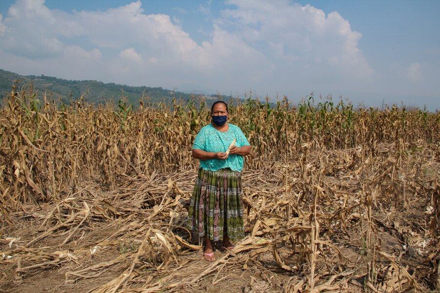 woman in green shirt standing in corn field
